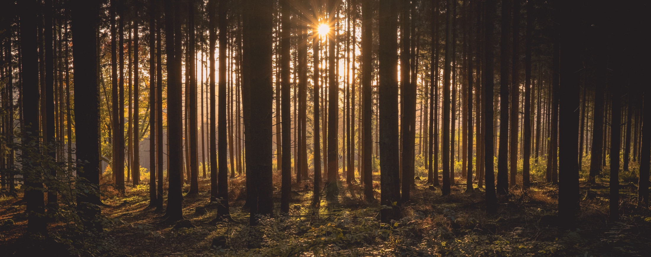 National Environmental Standards for Plantation Forestry